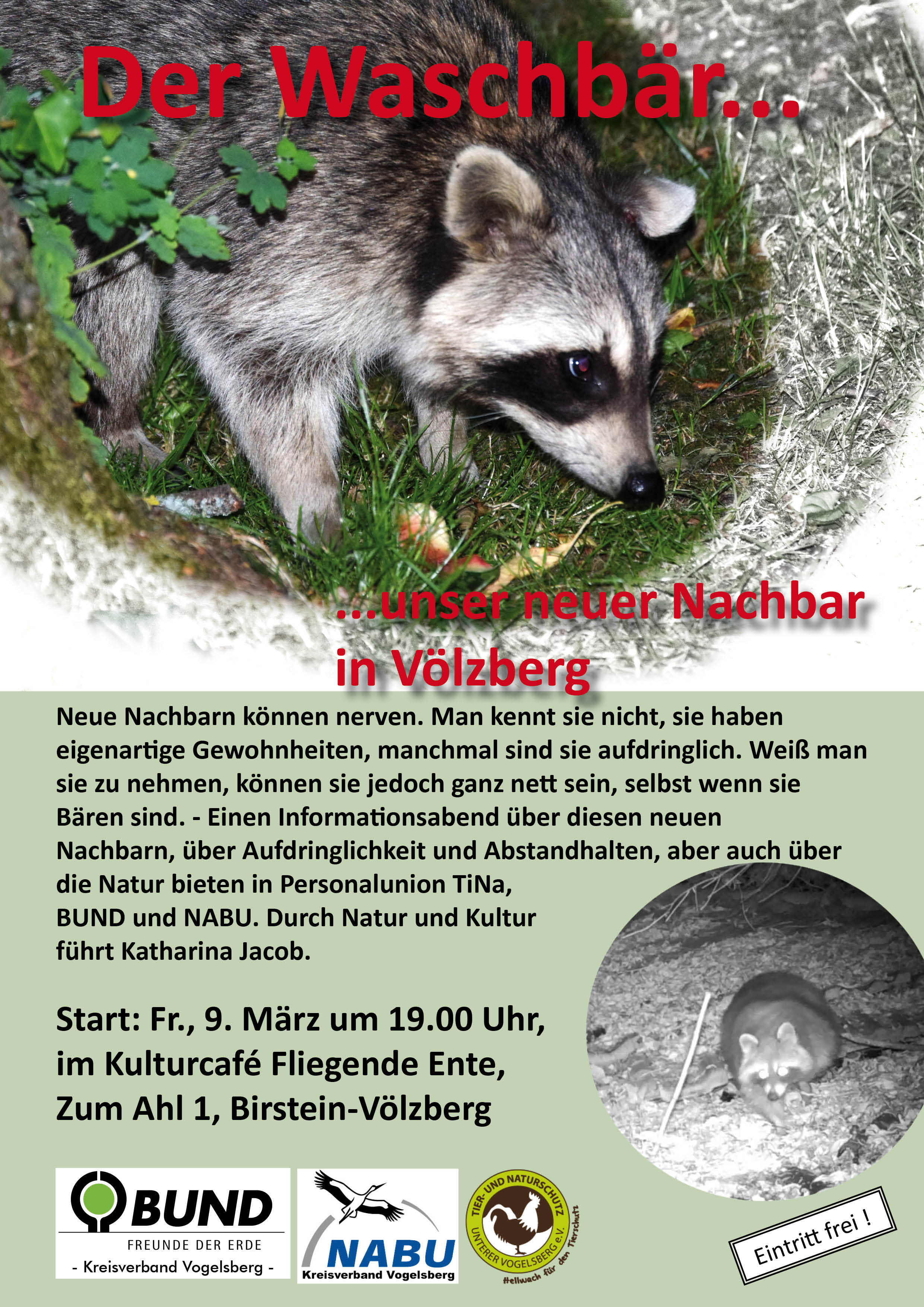 bdd96902a205b1 Kaum ein Tier ist derzeit so umstritten wie der Waschbär. Seit den 30er  Jahren ist er hier in Deutschland zu Hause